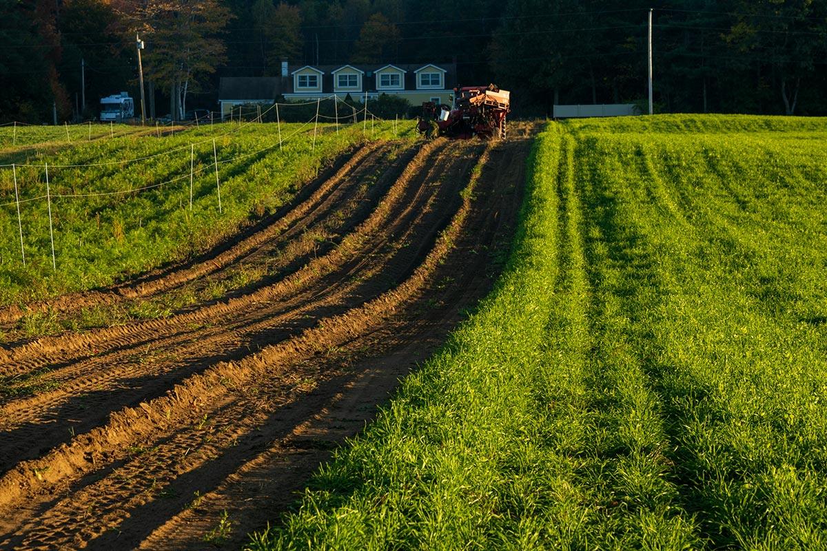 Farmland borders Thornton Oaks