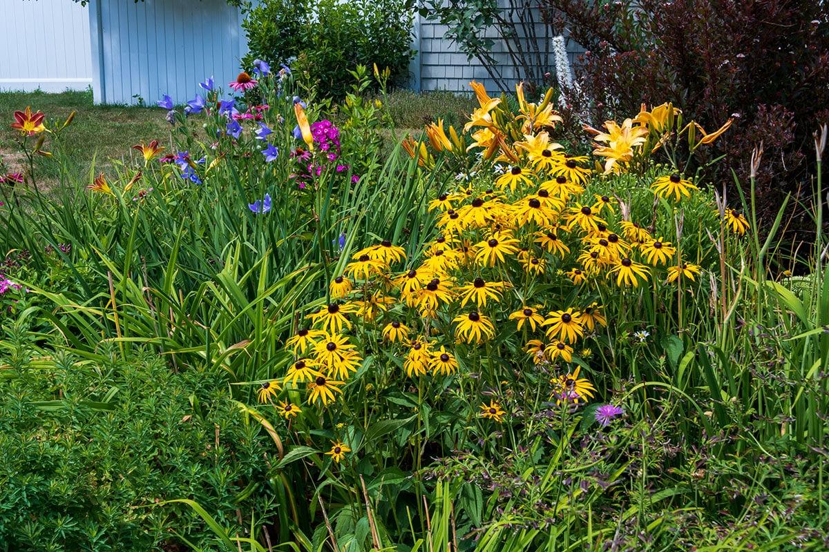 Thornto Oaks cottage garden in summer