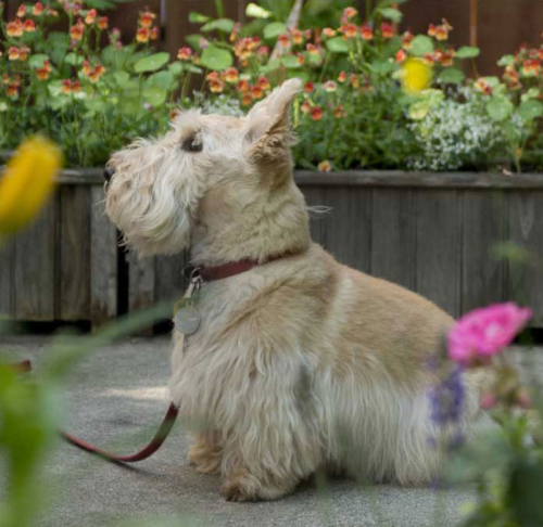 Pet friendly retirement in greater Portland Maine