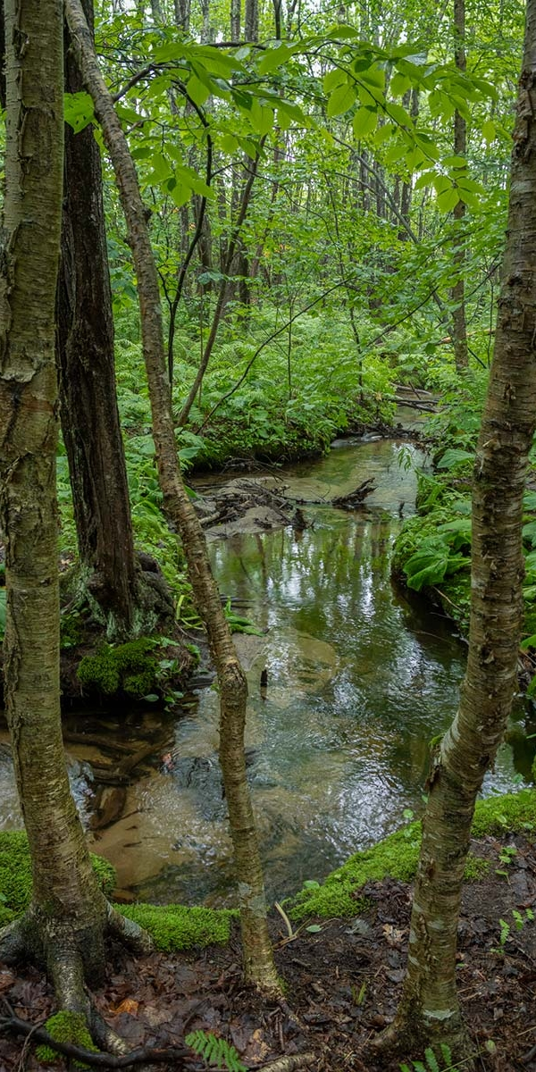 Sandy brook by the trails