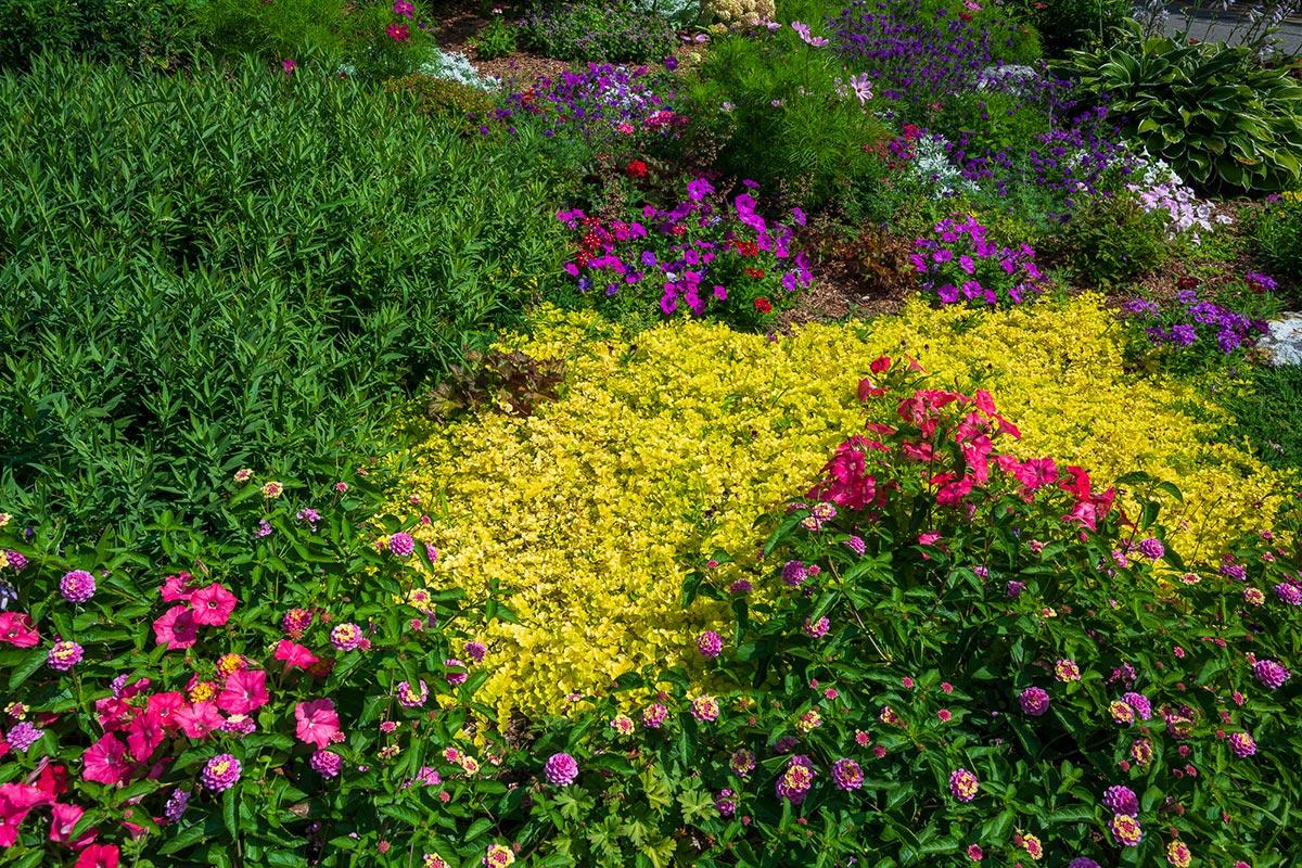 Thornton Oaks Retirement Community flower garden